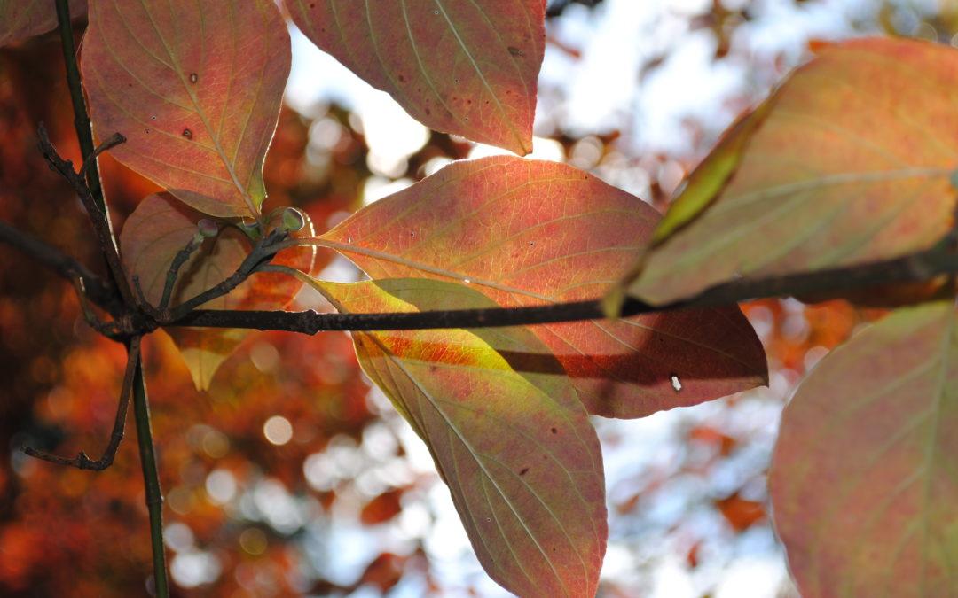 Fall into Seasonal Volunteering and Donating